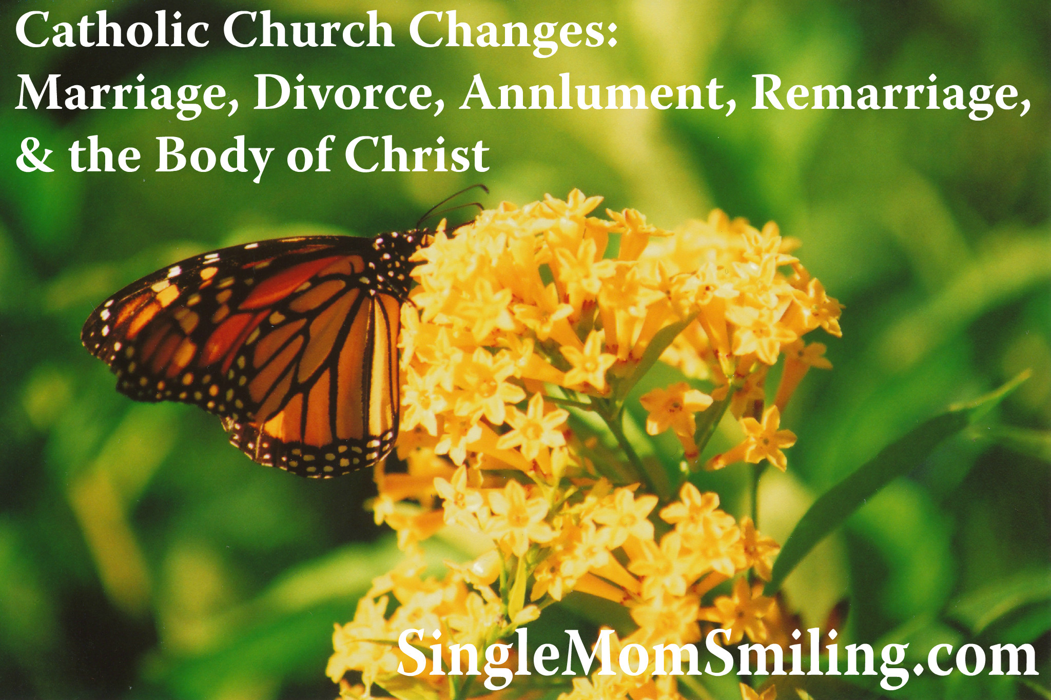 Butterfly - Catholic-Church-Changes-Marriage-Divorce-Annulment-Remarriage-Body-of-Christ-